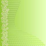 Grön bakgrund med raster och små vita blommor för våradvertizing planlägger Arkivfoto
