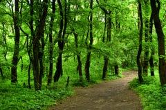 grön bana för skog Arkivfoto