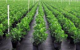 Grün bewässerte Anlagen Stockbilder