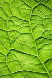 Grön bladyttersidatextur Arkivbilder