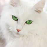 Grün gemusterte Katze Stockbilder