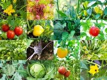 grön grönsak Arkivbild