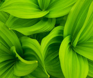 Grün lässt abstrakten Hintergrund Stockfotos