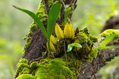 Grön mossa på träd Arkivfoto