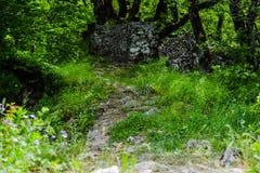 Grön skog, stenar på vandringsledet Royaltyfri Foto