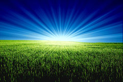 grön sun för fält Royaltyfri Bild