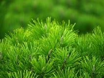 grön tree för bakgrund Arkivfoto