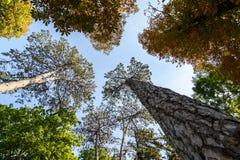 Gröna Forest Trees On Blue Sky Arkivfoto