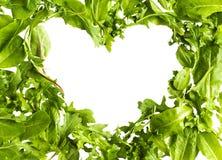Gröna grönsallatsalladblad som isoleras på vit bakgrund Fotografering för Bildbyråer