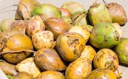 Gröna och gula kokosnötter Arkivbild