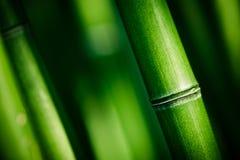 gröna stems för bambu Arkivbilder