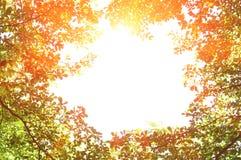 Gröna treeleaves i morgonhärlighet Arkivbilder