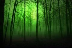 gröna trän Fotografering för Bildbyråer