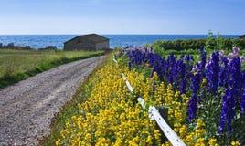 Gränd med blommor, hummerfällor, Newfoundland Royaltyfri Foto