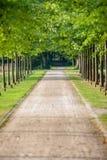 Gränden med gröna träd längs vandringsledet parkerar in på den soliga dagen, Arkivbilder