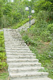 grändträdgård Royaltyfri Fotografi