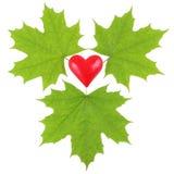 Grüne Ahornblätter, die ein rotes Plastikherz umgeben Stockfotos