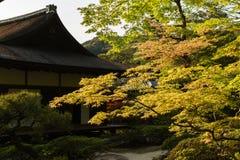 Grüne Ahornbäume im japanischen Garten Stockbild