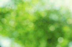 Grüne bokeh Zusammenfassungshintergründe Stockbild