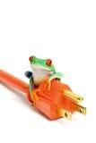 Grüne Energie - Frosch auf dem Netzstecker getrennt Stockfotografie