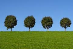 Grüne Felder und Bäume Lizenzfreie Stockfotos