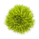 Grüne Gartennelken-Blume Stockfotografie