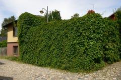 Grüne Hecke um das Haus, Kopfsteine Stockbild