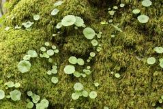 Grüne Invasion Stockfoto