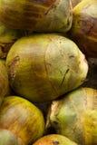 Grüne Kokosnüsse Indische Art Lizenzfreies Stockbild