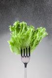 Grüne Kopfsalatblätter auf einer Gabel Stockfoto