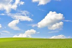 Grüne Landschaft mit Maisfeld und blauem Himmel Stockfotos