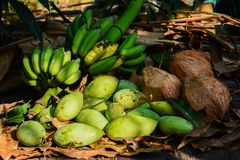 Grüne Mangos mit Bananen und Kokosnüssen trocknen Blätter Stockbild