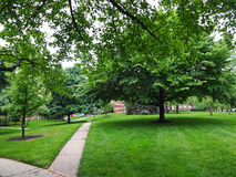 Grüne Nachbarschaft nach dem Regen Stockfotos