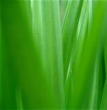 Grüne Natur. Lizenzfreies Stockbild