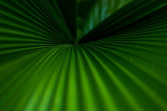 Grüne Palmblätter Lizenzfreies Stockbild