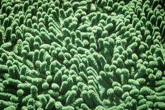 Grüne Reinigungsfußfußmatte Lizenzfreie Stockfotos