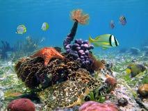Grüne Schildkröte mit bunter Marinelebensdauer Lizenzfreie Stockfotos