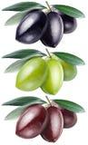 Grüne, Schwarze und Kalamata-Oliven mit Blättern auf einem weißen backgrou Stockfotos