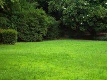 Grüne sonnige Lichtung Stockfotos