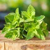 Grüne tadellose Blätter Stockfotografie