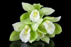 Grüne und weiße Orchideen Stockbilder