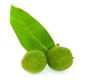 Grüne Walnuss Stockbild