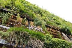 Grüne Wand in einem ökologischen Gebäude Stockbilder