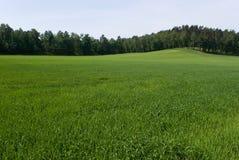 Grünen Sie Feld Stockbild