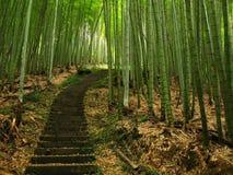 Grüner Bambuswald Stockfoto