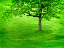 Grüner Baum auf grünem Hügel Lizenzfreie Stockfotografie