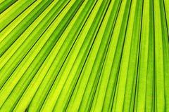 Grüner Blathintergrund Stockfoto