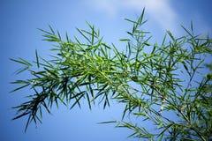 Grüner Blattbambusbaum Stockfoto
