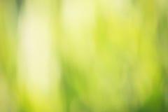 Grüner bokeh Hintergrund Stockfotografie