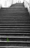 Grüner Büschel des Grases entlang den langen Leitern Lizenzfreie Stockfotografie